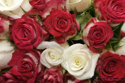 Bridesmaids bouquets – Double Delights with a few ivory roses